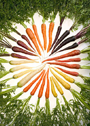 Carrot History: Originally Purple and Grown as Medicine by Kirsten ...